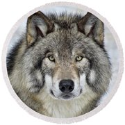 Round Beach Towel featuring the photograph Full Attention  by Tony Beck
