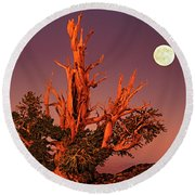 Round Beach Towel featuring the photograph Full Moon Behind Ancient Bristlecone Pine White Mountains California by Dave Welling