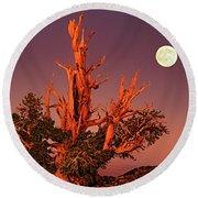 Full Moon Behind Ancient Bristlecone Pine White Mountains California Round Beach Towel