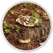 Round Beach Towel featuring the photograph Fungi And Needles And Tree Trunk  Oh My by Carol Lynn Coronios