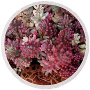Fungus And Succulents Round Beach Towel
