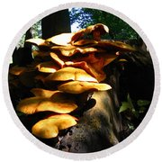 Round Beach Towel featuring the photograph Fungus Colony 23 by Maciek Froncisz