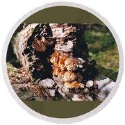 Fungus Is Beautiful Round Beach Towel
