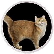 Funny British Cat Golden Color Of Fur Round Beach Towel