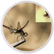 Furniture And Flying Dragonfly Round Beach Towel