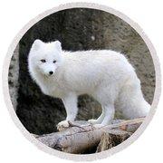 Furry Arctic Fox  Round Beach Towel