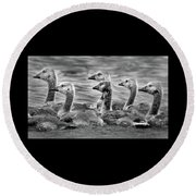 Gaggle Of Goslings Round Beach Towel