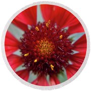 Round Beach Towel featuring the photograph Gaillardia by Brenda Jacobs