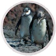 Galapagos Penguins  Bartelome Island Galapagos Islands Round Beach Towel
