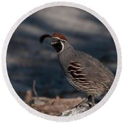 Gambel's Quail Round Beach Towel by Martina Thompson