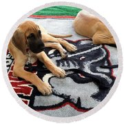 Gameday Great Dane Puppies Round Beach Towel