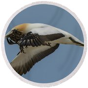 Round Beach Towel featuring the photograph Gannets 1 by Werner Padarin
