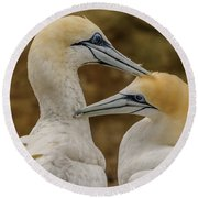 Gannets 4 Round Beach Towel