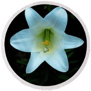 Round Beach Towel featuring the photograph Garden Lily by Tom Singleton