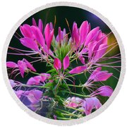 Round Beach Towel featuring the photograph Garden Magic by Rodney Campbell