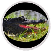 Round Beach Towel featuring the photograph Gator Grin .png by Al Powell Photography USA