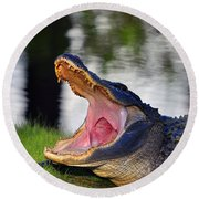 Round Beach Towel featuring the photograph Gator Gullet by Al Powell Photography USA