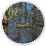 Gator In Cypress Lake 3 Round Beach Towel