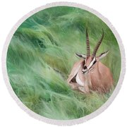 Gazelle In The Grass Round Beach Towel