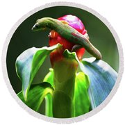 Round Beach Towel featuring the photograph Gecko #3 by Anthony Jones
