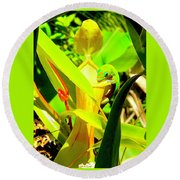 Gecko On Mosquito Catcher Orchid Round Beach Towel