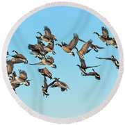 Geese In Flight Round Beach Towel
