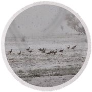 Geese Walking In The Snow Round Beach Towel