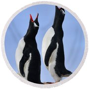 Gentoo Love Song Round Beach Towel