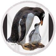 Gentoo Penguins Round Beach Towel