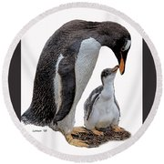 Gentoo Penguins Round Beach Towel