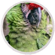 George The Parrot Round Beach Towel