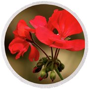 Round Beach Towel featuring the photograph Geranium Blooms by Sheila Brown
