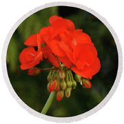 Round Beach Towel featuring the photograph Geranium  by Cristina Stefan