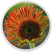 Round Beach Towel featuring the photograph Gerber Bud by Elvira Ladocki