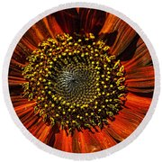Gerber Daisy Full On Round Beach Towel