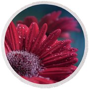 Round Beach Towel featuring the photograph Gerbera Red Jewel by Sharon Mau