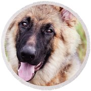 German Shepherd Dog Round Beach Towel by Stephanie Frey