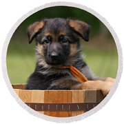 German Shepherd Puppy In Planter Round Beach Towel