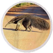 Giant Anteater Crosses The Transpantaneira Highway In Brazil Round Beach Towel