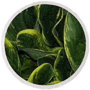 Giant Hosta Closeup Round Beach Towel