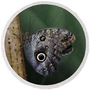Giant Owl Butterfly On Screw Pine Round Beach Towel