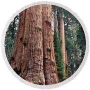 Round Beach Towel featuring the photograph Giant Sequoia II by Kyle Hanson