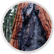 Round Beach Towel featuring the photograph Giant Sequoia by Kyle Hanson