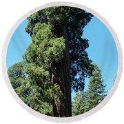 Giant Sequoia, Sequoia Np, Ca Round Beach Towel