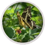 Giant Swallowtail On Lantana Round Beach Towel