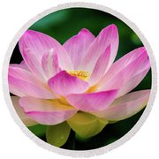 Gigantic Lotus Red Lily Round Beach Towel