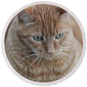 Ginger Cat Round Beach Towel