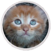 Ginger Kitten With Blue Eyes Round Beach Towel by Sergey Lukashin