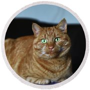 Round Beach Towel featuring the photograph Ginger Marmalade Cat by Nareeta Martin