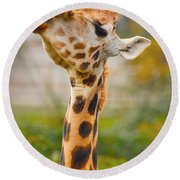 Giraffe 3 Round Beach Towel